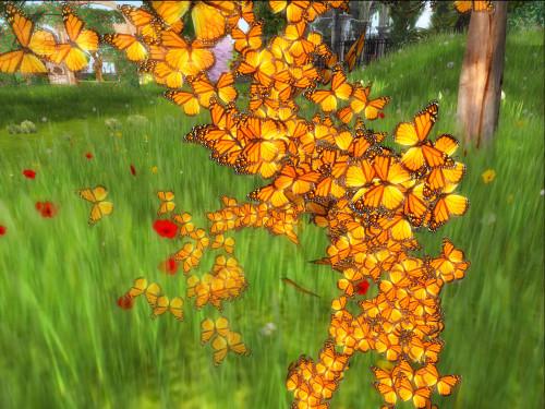 ButterflyDream